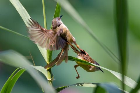 深セン洪水公園の鳥.jpg