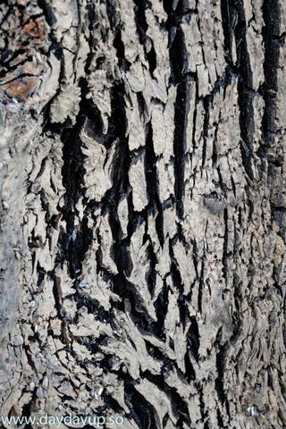 木の皮.jpg